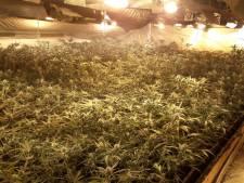 Professionele hennepkwekerij met 700 planten gevonden in bedrijfspand in Asten