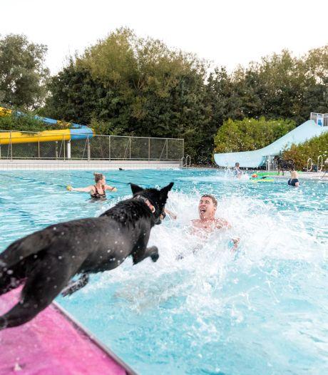Even is De Stok een zwemparadijs voor honden: 'Eerst oefenen in het kinderbadje en daarna het diepe in'