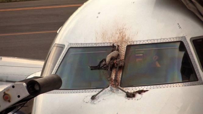 Crash met ganzen dwingt vliegtuig tot noodlanding