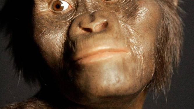 Onderzoekers werpen nieuw licht op dood van onze voorouder Lucy