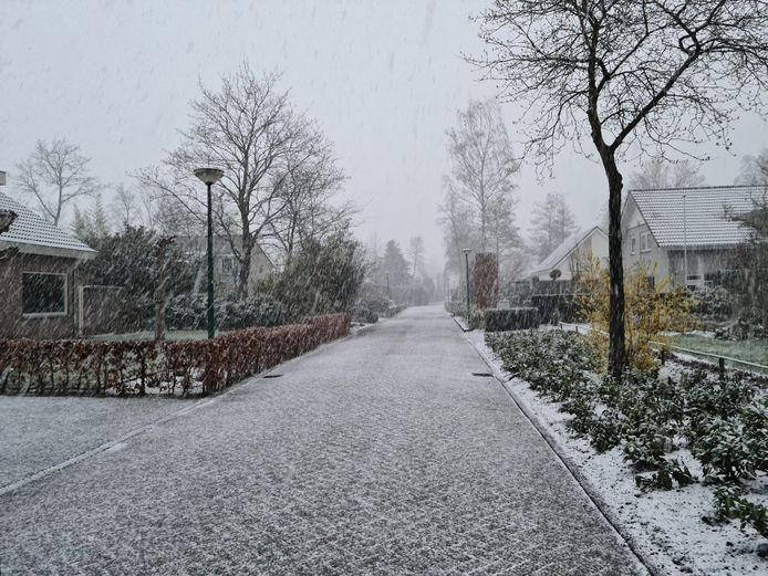 De sneeuw komt hard naar beneden in Kaatsheuvel.
