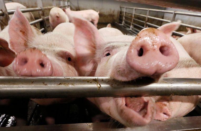 Vooral varkensboeren zien hun inkomsten dalen.