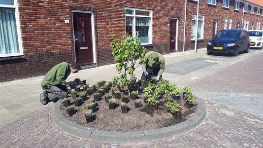 De laatste tijd is er meer groen aangeplant in Ter Heijde.