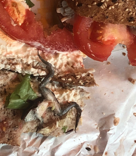 Vrouw vindt dode kikker in broodje van Vlaamse broodjeszaak