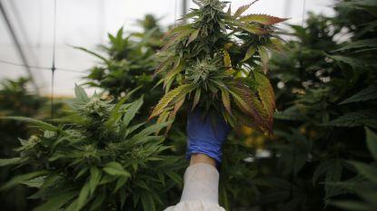 Geluidsoverlast doet cannabiskwekende dj de das om