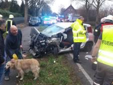 Verweesde golden retriever wordt opgevangen na auto-ongeluk, eigenaar nog steeds in coma