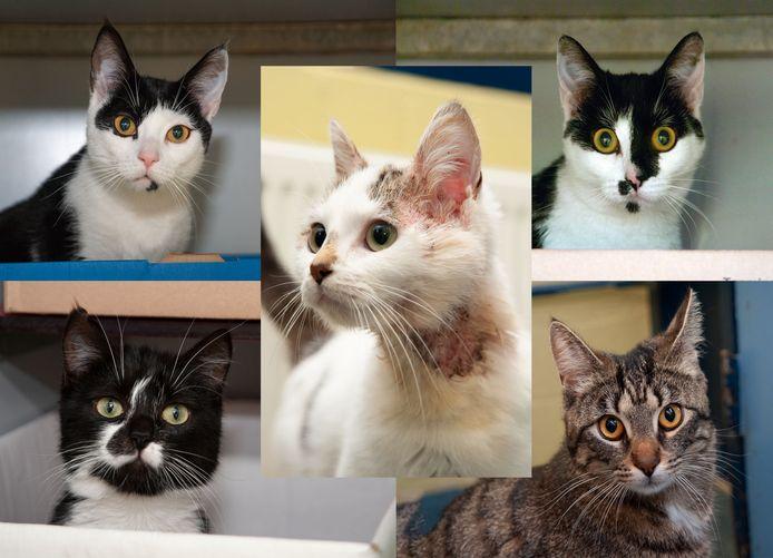 De katten werden in twee mandjes achtergelaten in Arkel.