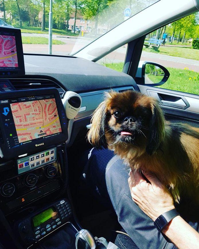 De 'hete hond' bij agenten op schoot in de politieauto.