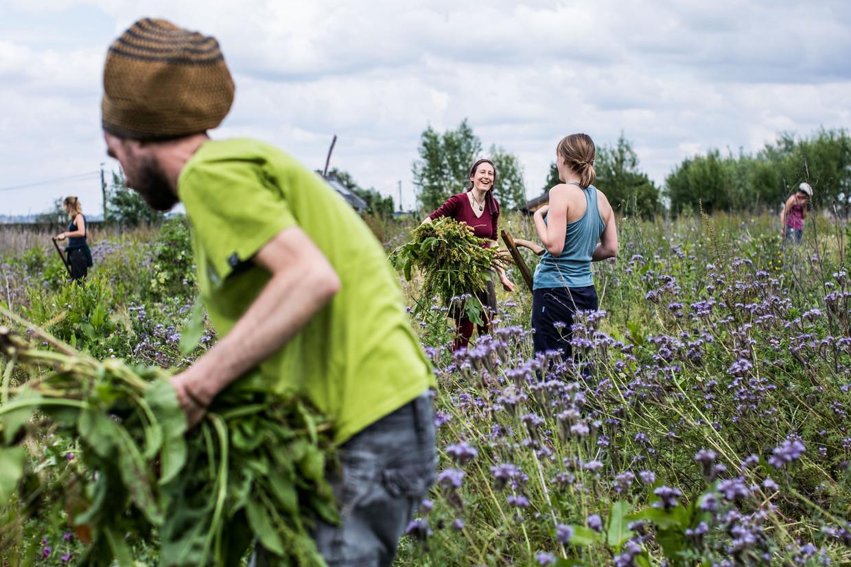 Boskanter is een zelfvoorzienende boerderij in Brakel waar de bewoners als gemeenschap samenleven. Beeld Bas Bogaerts