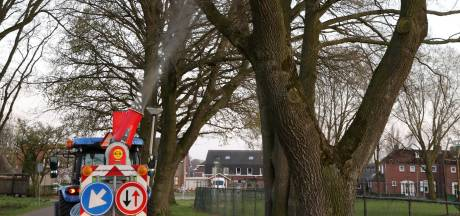Lawaai in de nacht: Gildebor in de aanval tegen de eikenprocessierups in Hengelo