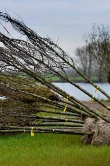 West Betuwe schrikt van eigen besluit: moeten er wel 6500 bomen om?