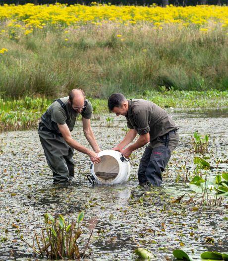 Bedreigde boomkikker en knoflookpad weer terug op de Brabantse Wal