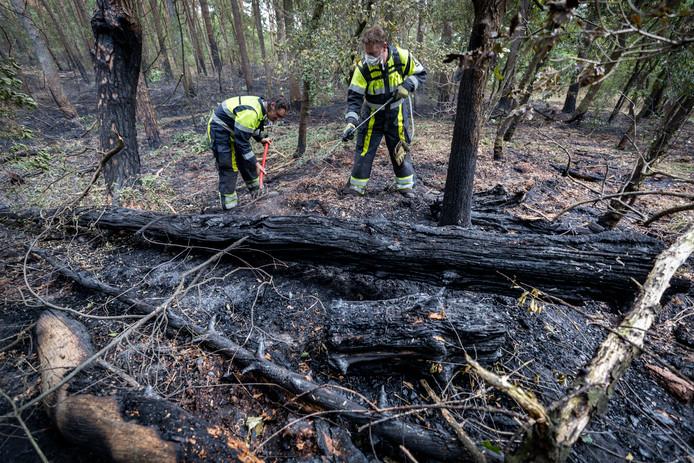 Een jaar geleden werd de Loonse en Drunense Duinen getroffen door een natuurbrand.