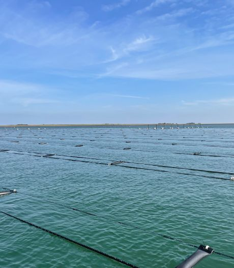 Dutch Seaweed Group pakt het groot aan: in april oogst ze 120.000 kilo zeewier uit Oosterschelde