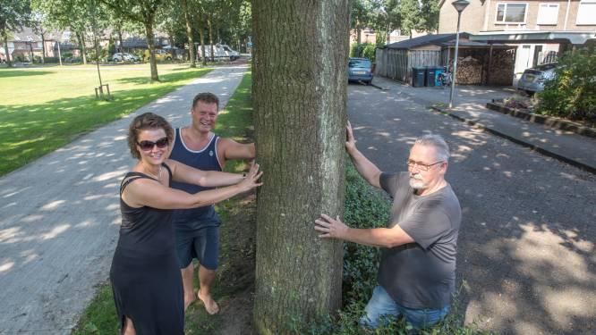 'Ergernis-eiken' veranderen niets aan veiligheid Steenboerweg in Zwolle