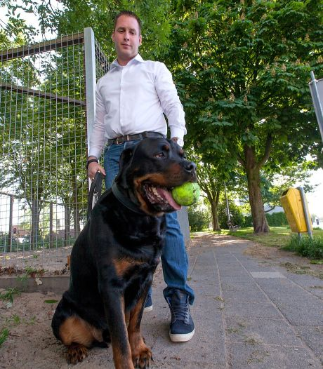 Alphense Hondenbezitter: 'Honden op N11 zijn gevaar'