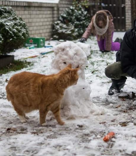 Sneeuwpoppen, sneeuwballen, sneeuwpret: dit zijn de mooiste foto's van onze lezers