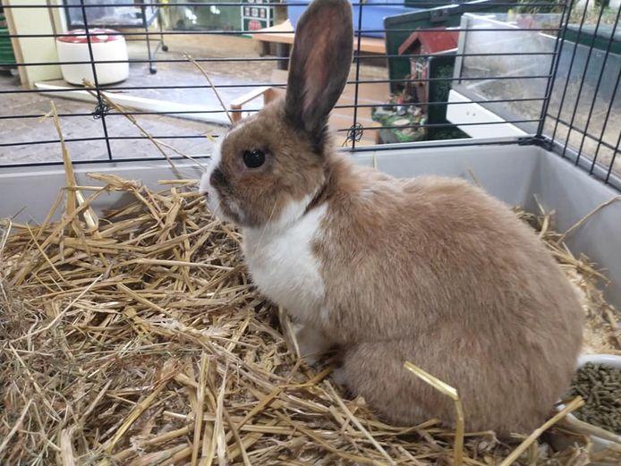 Dit konijn werd bij kinderboerderij de Oude Zustertuin gedumpt.