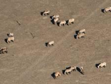 Politie: Aangifte om dierenleed grazers Oostvaardersplassen heeft geen zin