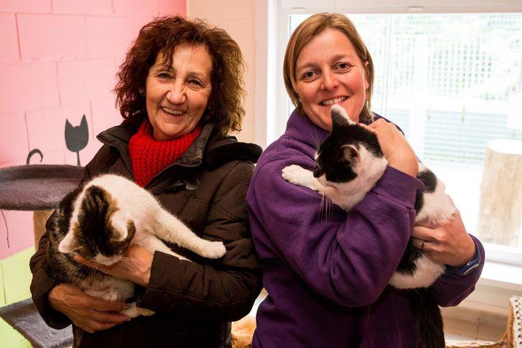 Vrijwilligers Henny en Sofie komen de katten bijna dagelijks een dikke knuffel geven.