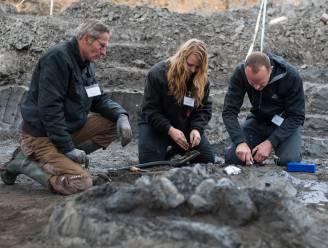 Meer dan tien miljoen jaar oud skelet van walvis opgegraven