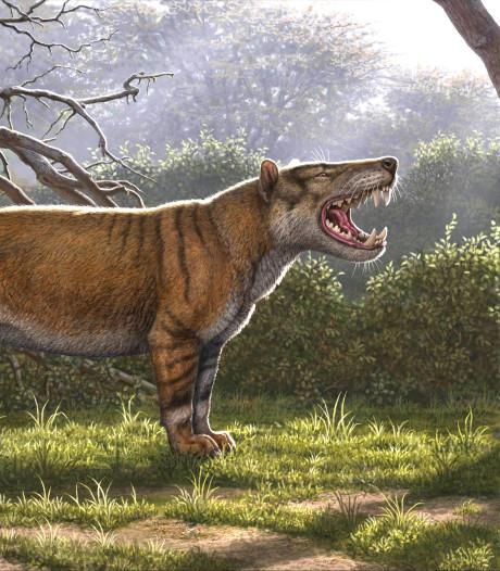 Wetenschappers ontdekken grootste vleesetende zoogdier ooit