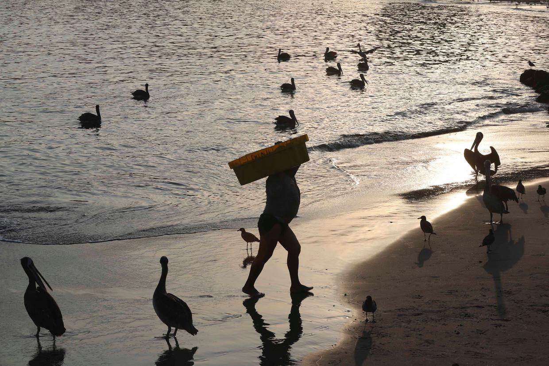 Een visser in Peru brengt zijn vangst aan land. Grote delen van Zuid-Amerika zullen door klimaatverandering te heet worden voor de mens.