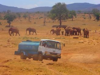 Elke dag rijdt Patrick urenlang om de dorstige dieren van Kenia water te geven