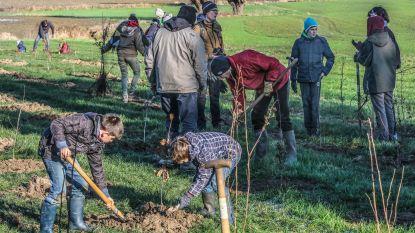 Kortrijk is 1.000 bomen rijker, aanplant klimaatbos is succes