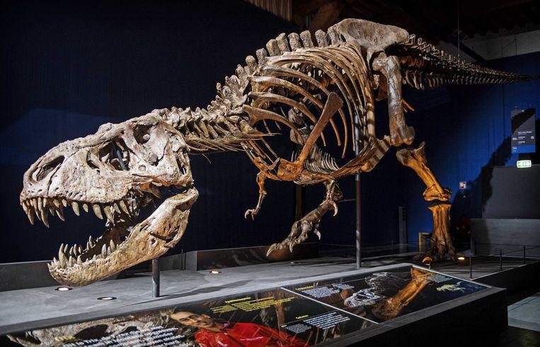 Fossiel van de tyrannosaurus.