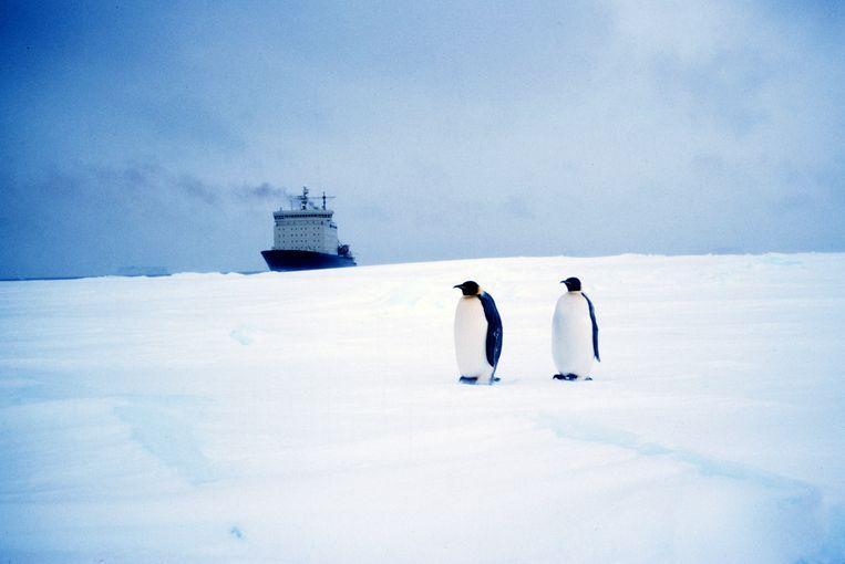Keizerspinguïns waren ook de sterren in de tekenfilm 'Happy Feet' (2006). Beeld Getty