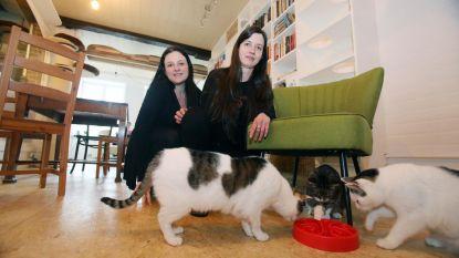 """Kattencafé Puss & Books vreest voor voortbestaan: """"Zonder giften redden we dit niet"""""""