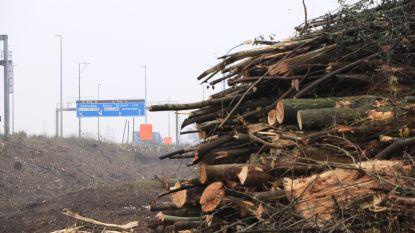 Struiken en bomen gerooid op bermen E17