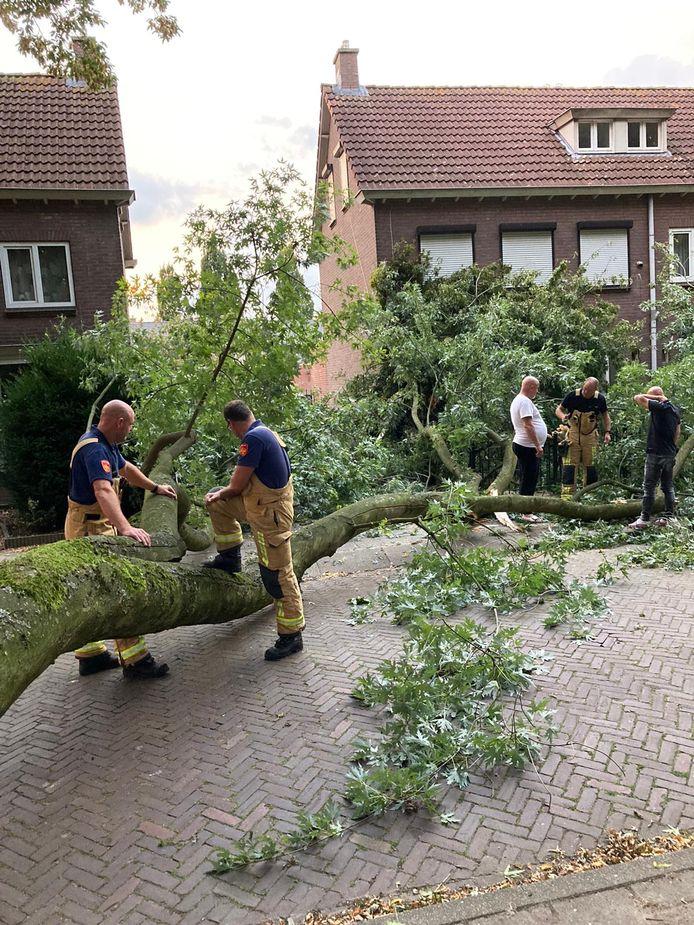 De afgebroken boomtak in de Hortensialaan in Helmond.