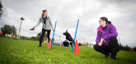 Bunniks hondenparadijs genomineerd als 'leukste hondenuitlaatplaats van Nederland'