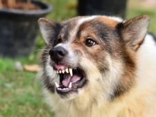 'Arnhemmers mijden parken, straten en bossen uit angst voor agressieve honden'