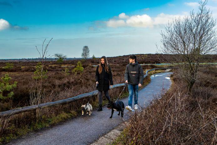 Honden moeten aangelijnd zijn op de Sallandse Heuvelrug.