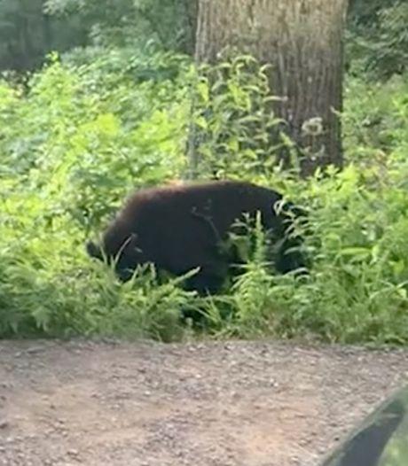 Un couple de touristes se retrouve face à un ours noir