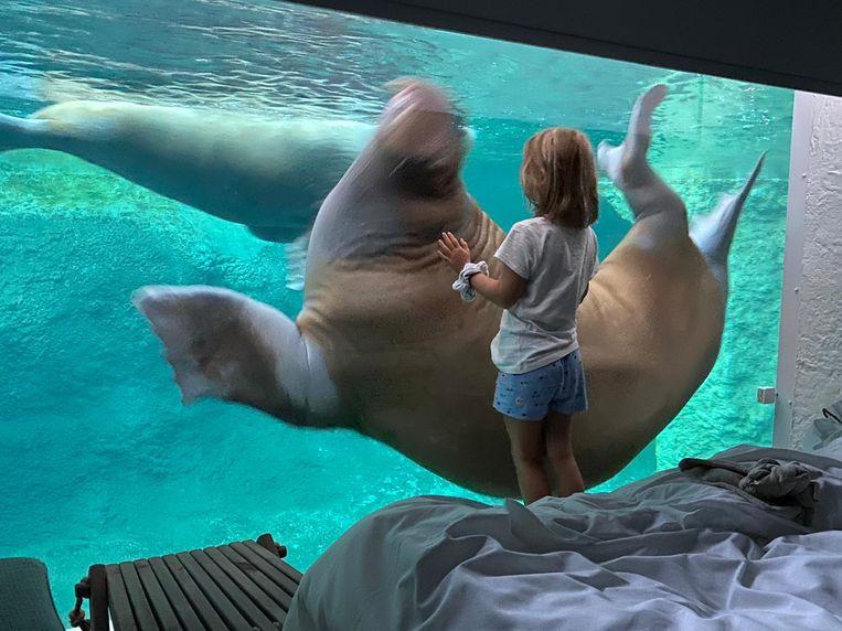 Op zaterdagochtend oog in oog staan met een walrus, blijkt een magische ervaring.  Beeld Privéfoto
