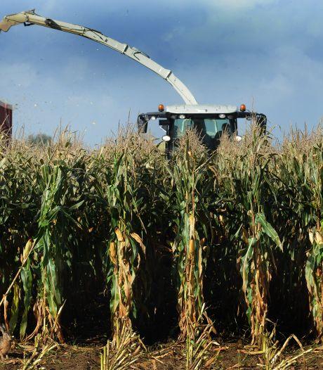 Natte zomer: boeren kunnen maïs niet op tijd van het land halen