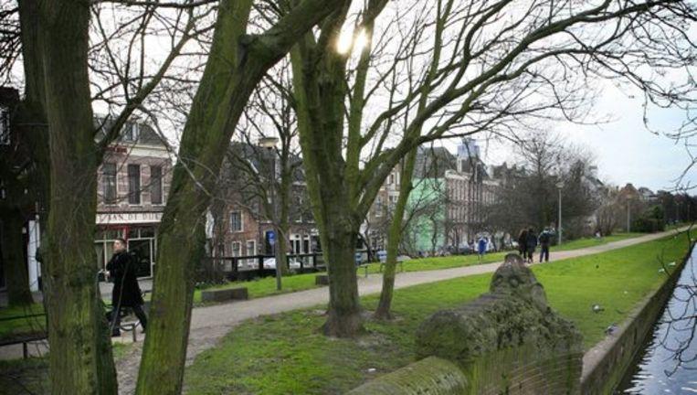 Bomen op de Ringdijk, moeten ze weg of niet? Foto FLoris Beeld