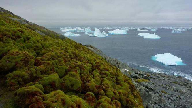 IJs maakt in sneltempo plaats voor mos op Antarctica