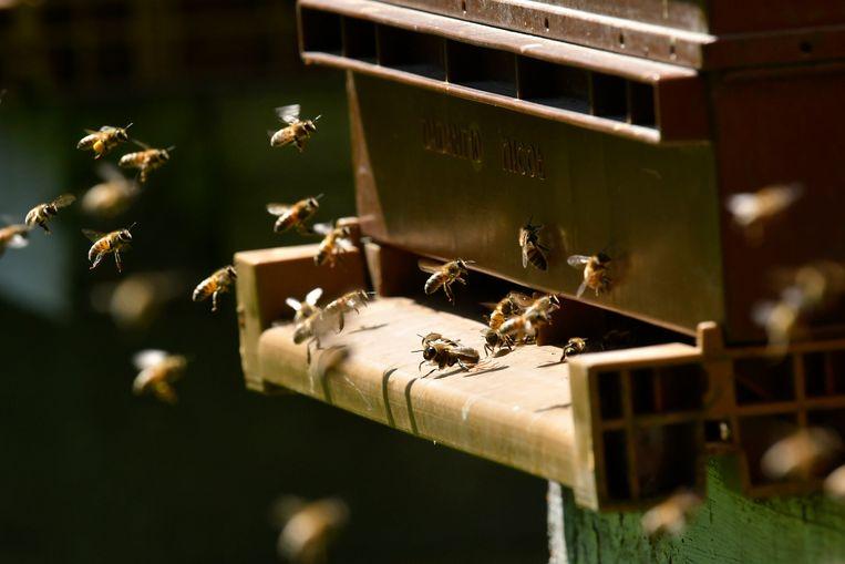 Bijen worden steeds duurder en zeldzamer.  Beeld Photo News