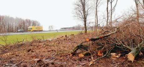 Rijkswaterstaat kapt 14.000 essen langs A6