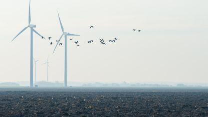 Windmolens doen vleermuis en vogel de das om