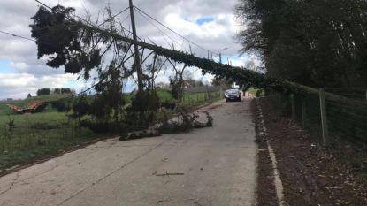 Storm raast door het Hageland, brandweer bedolven onder oproepen van afgerukte kabels en weggewaaide dakpannen en omgewaaide bomen