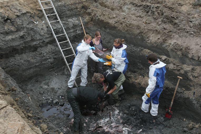Vier jaar geleden vond een opgraving van potvis Valentijn plaats om na te gaan of een reconstructie mogelijk was.