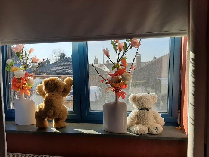 Deze twee beren zijn te vinden in Hoogstraten.