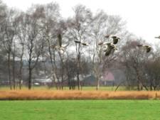 Boeren voelen zich gegijzeld door natuur Wierdense Veld: 'Wij willen ook een toekomst'