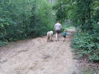 Wandel eens met een pony door de Kastelse bossen